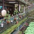 茶店とわさび田