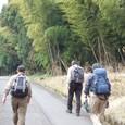 竹藪を歩く