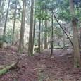 杉の森です