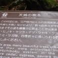 江戸時代から森は守られてきた
