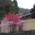 大滝に行く道で桃に出会う