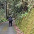 苔むす石垣の道