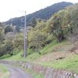みかんの丘通過