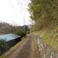 奈良の古道をあるいているようです