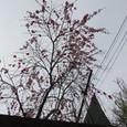 上から桃の花