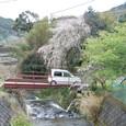 小鍋共有温泉と桜