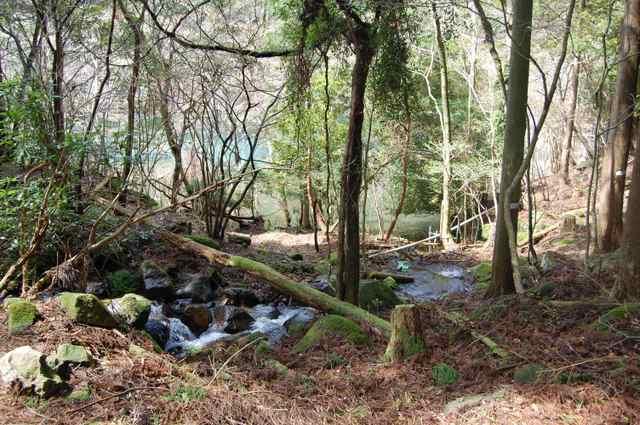 森の中を沢が流れる