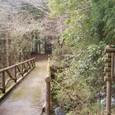 二本杉峠への道