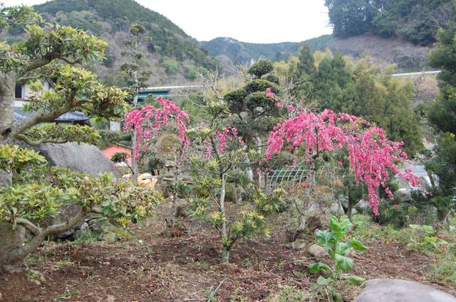 庭には桃の花が