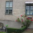 薔薇と自転車