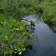 水芭蕉と池塘
