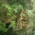 岩を砕く森の力