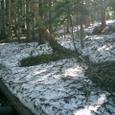 根雪は融けています