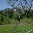 燧ヶ岳遠望