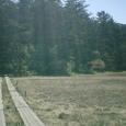 池塘と木道