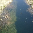 池塘と透き通る水