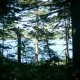 原始の森と神秘の沼