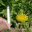 タバコと比較