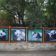 パンダの可愛い写真