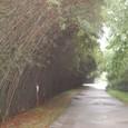パンダ園の笹道