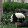 パンダ 初めて観ました