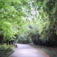 新緑のパンダ園
