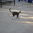 グエル公園の猫