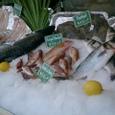 朝市 鮭とか
