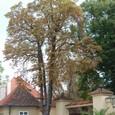 城の前に大きな木が
