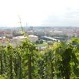 ブドウ畑よりプラハの街