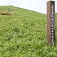 桃岩付近の野生植物(天然記念物)