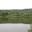 静かな森の沼