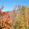 リフトから眺める紅葉