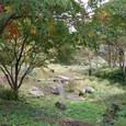 六甲高山植物園 1933年開園