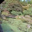 睡蓮の池とプリンス橋