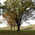 鉄砲山古墳と巨木