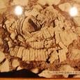 稲荷山古墳礫槨遺物出土状況 挂甲
