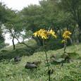 黄色い花(笑)