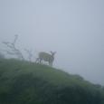 霧の中に鹿さん