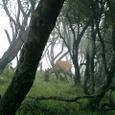 鹿の居る塔ノ岳