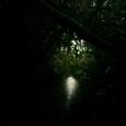 暗闇の藪のトンネル