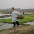 籠で苗を運ぶ婦人