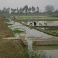 水路から一旦田圃の一部に水を溜める