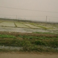 水路と干渉部と田圃