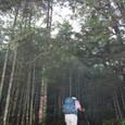 見晴らしが利かない森の道