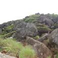完全に這松帯 最後の岩の道