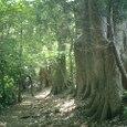 巨木の森だ 鳥獣保護区です