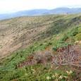 高山植物の季節は終わった