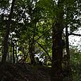 多賀宮の杜