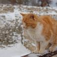 トロイ(トロイア)遺跡を見守るノラ猫